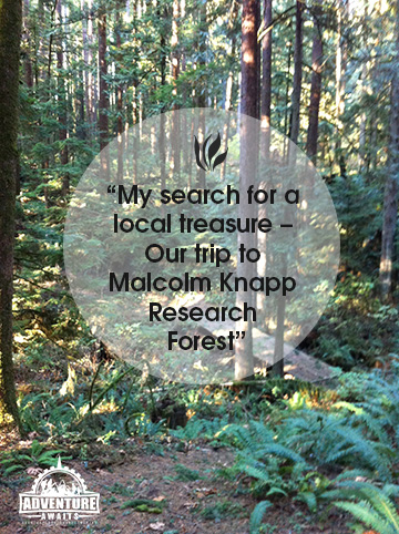 Malcolm Knapp Research Forest - My search for local adventure!