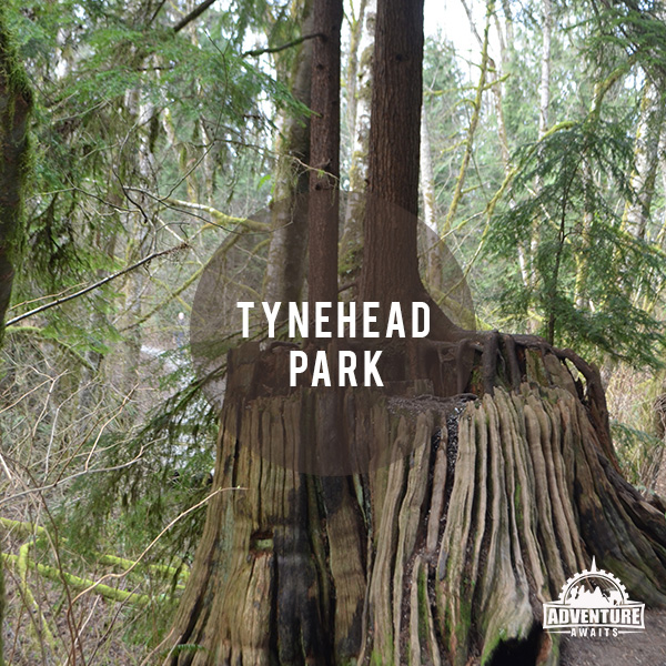 Tynehead Park is a great place to take the family, I should know, I grew up there and now love taking my kids there!