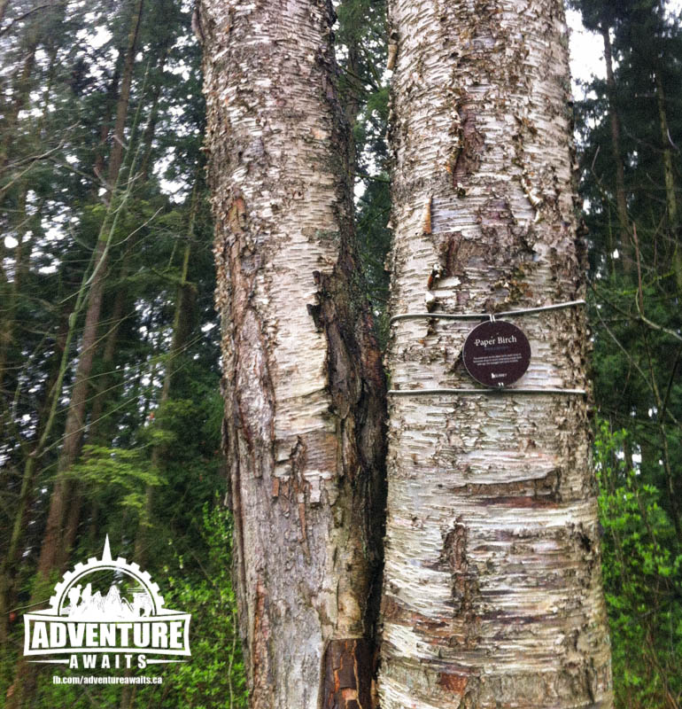 The park boasts a wide variety of trees that aren't native to the area, so they are nicely identified with special plaques. Educational bonus for the day!