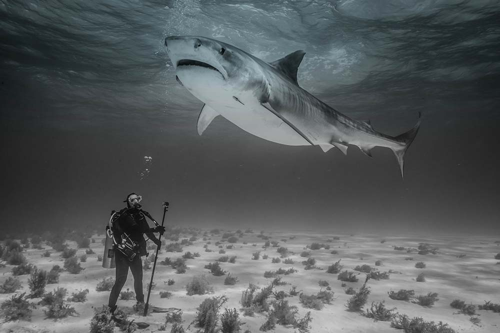 Shark and Awe - Recreational Diving with sharks in the Bahamas - Jeff Britnell