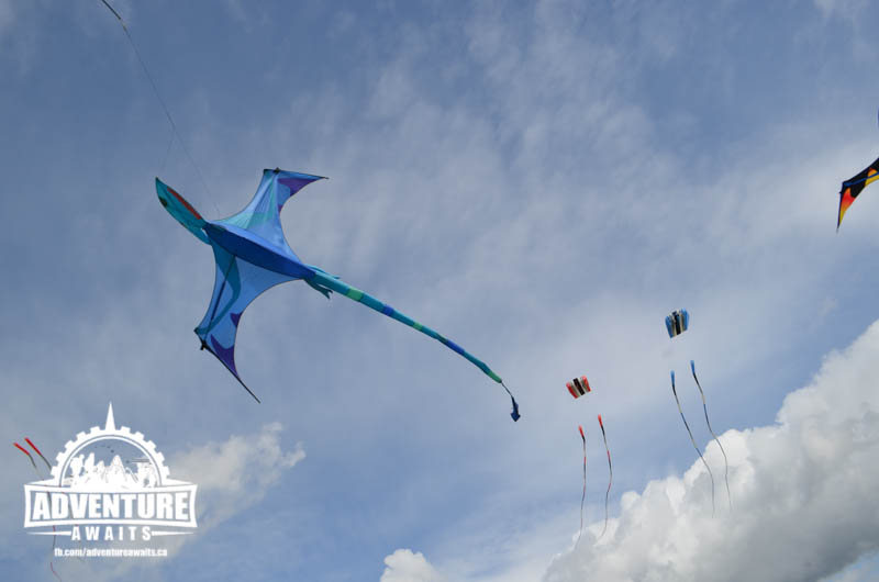 Kite Flying at Tulip Town