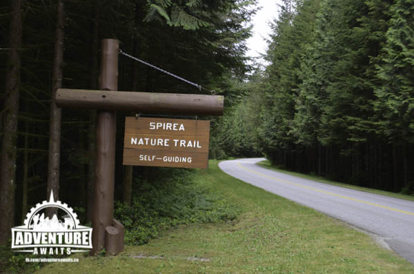 Spirea Nature Trail - Golden Ears Park