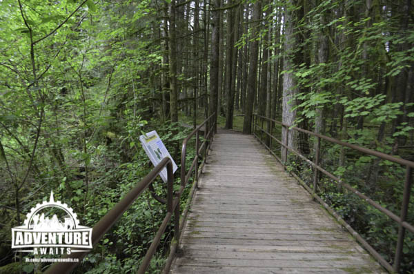 Golden Ears Park- Boardwalks