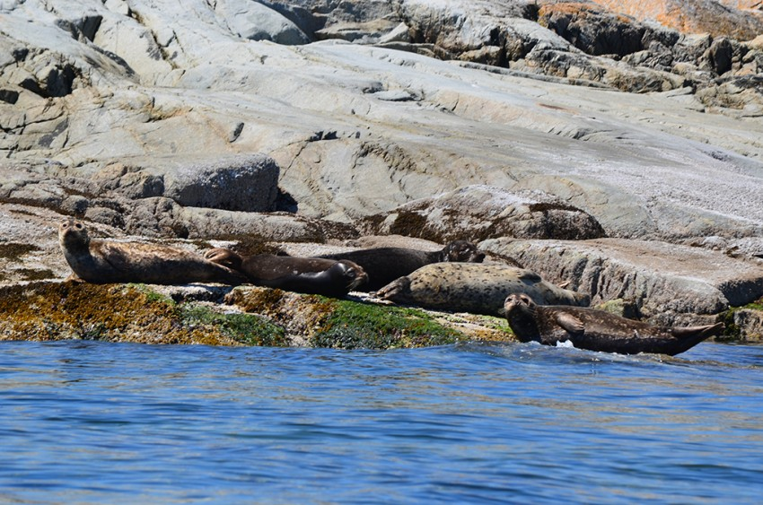 seals bathing in the sun