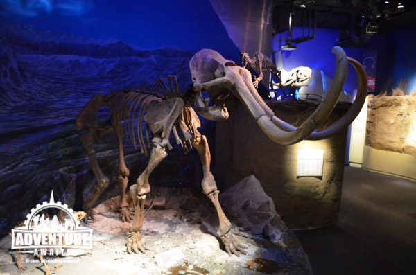 Dinosaurs weren't the only ones on display! This was a beautiful Wolly Mammoth Fossil!