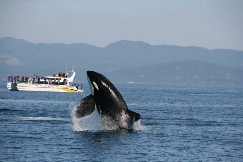 Eagle Wing Whale Watching Tours for our Christmas Gift Guide For Outdoor Moms
