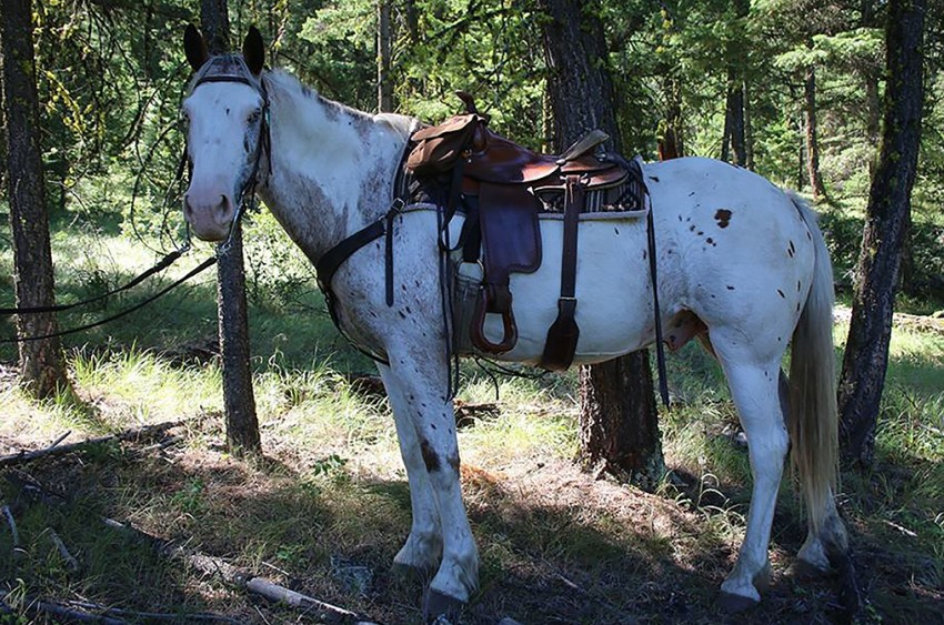 Family adventures come in all shape and sizes at YD Guest Ranch! Photo credit YD Guest Ranch.