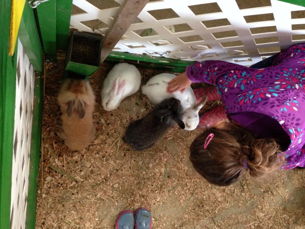 Petting rabbits at aldor acres