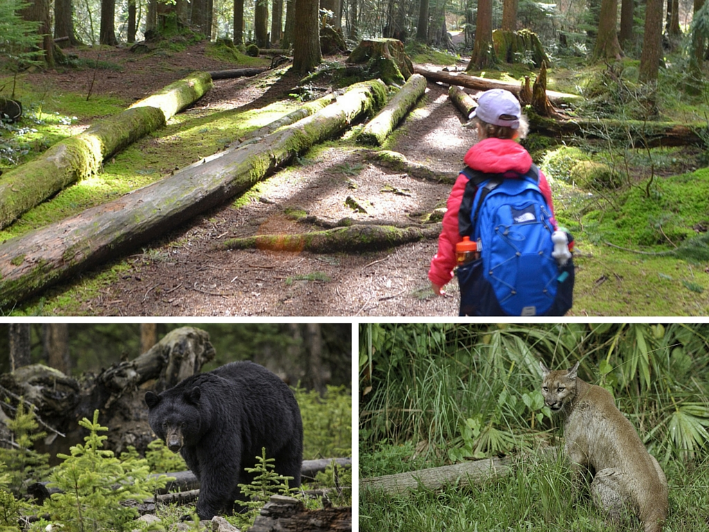 girl hiking in forest where bears and cougars could be