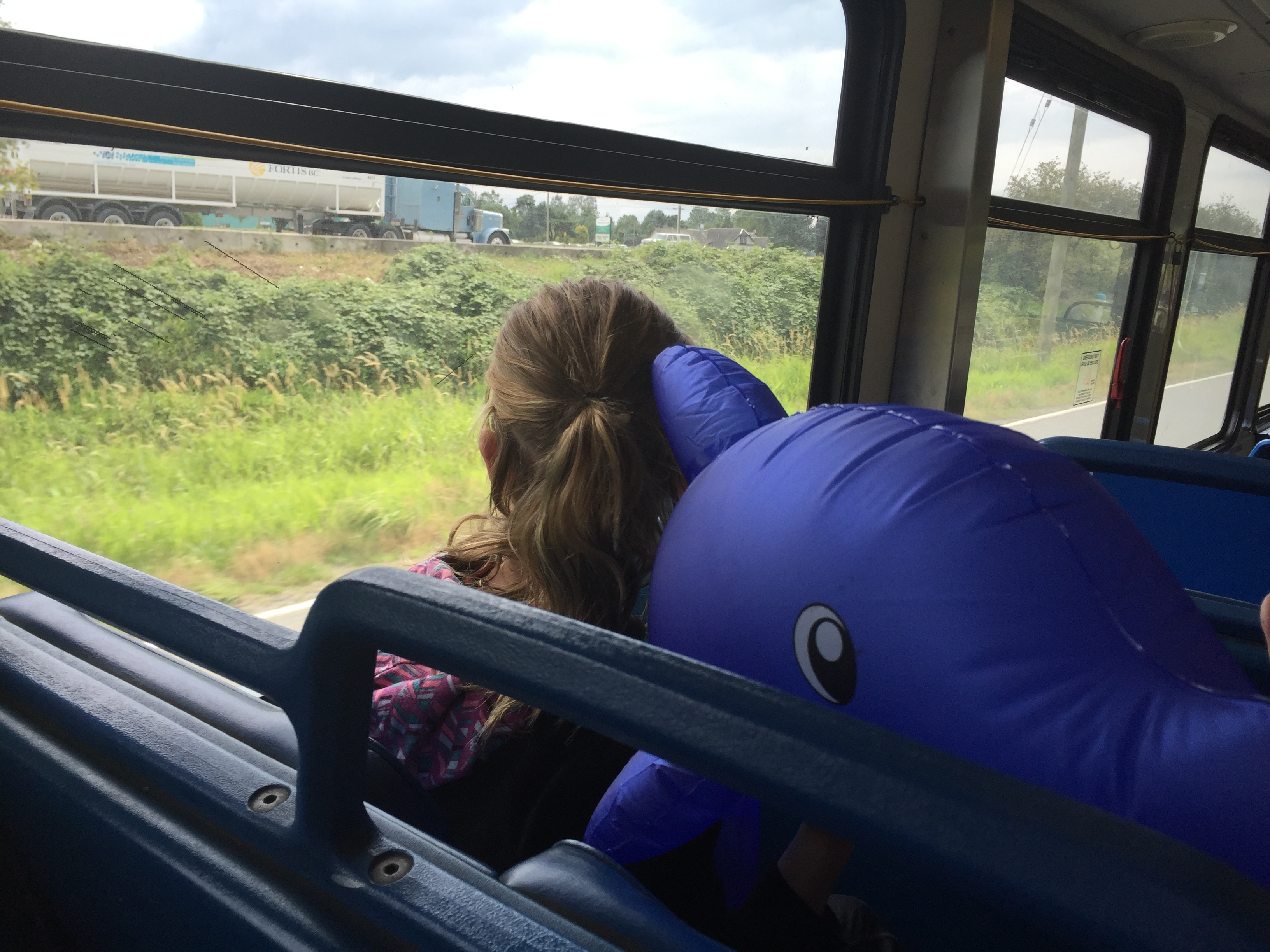 Dolphin goes for a ride with #ExploreBCbyBus