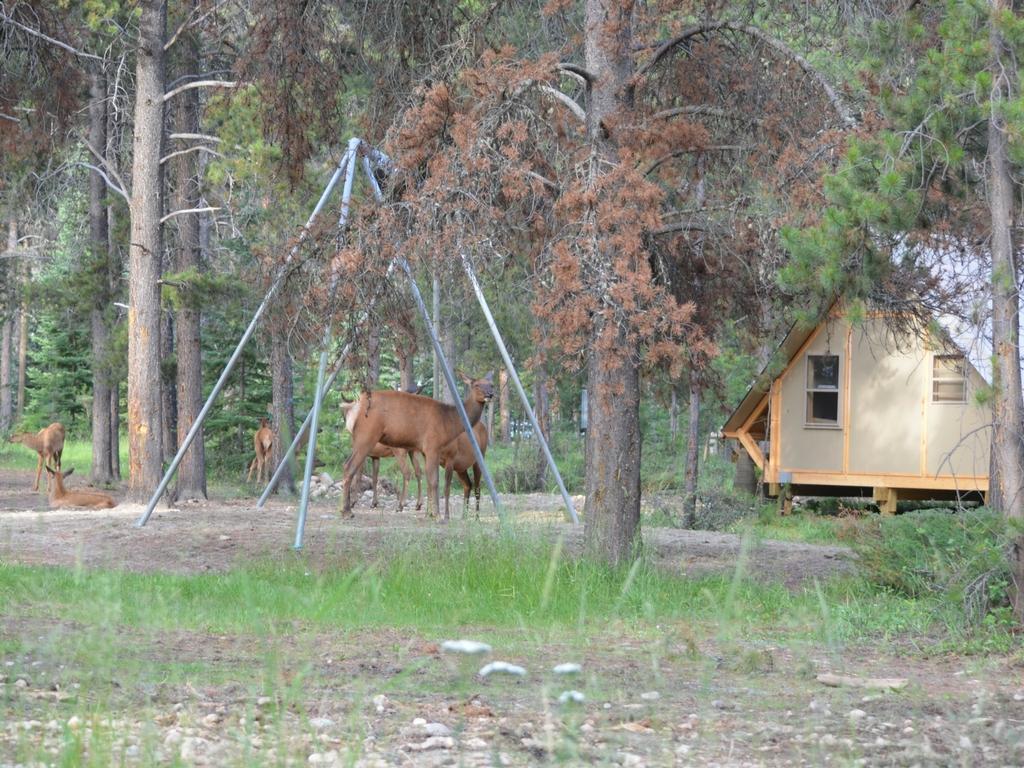 elk grazing outside of an oTENTik