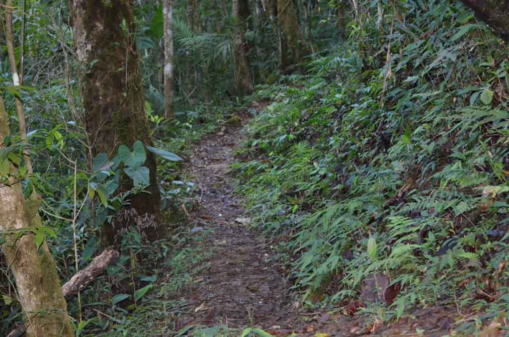 hiking trail through the jungle of costa rica