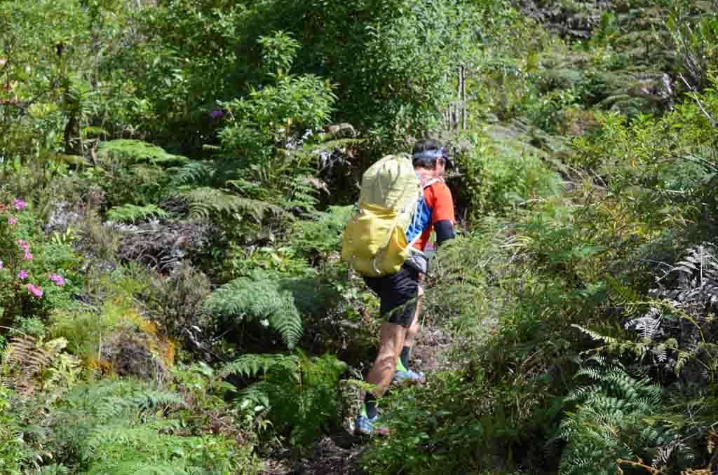 hiking guide in the costa rica jungle trails