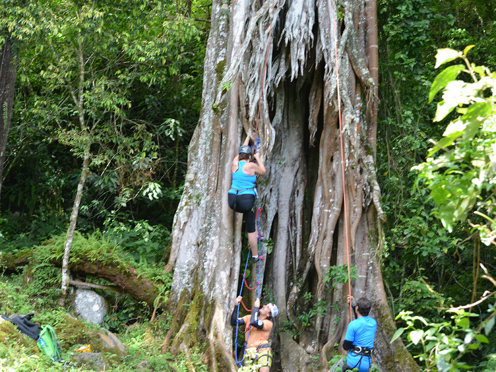 woman climbing tree in costa rica