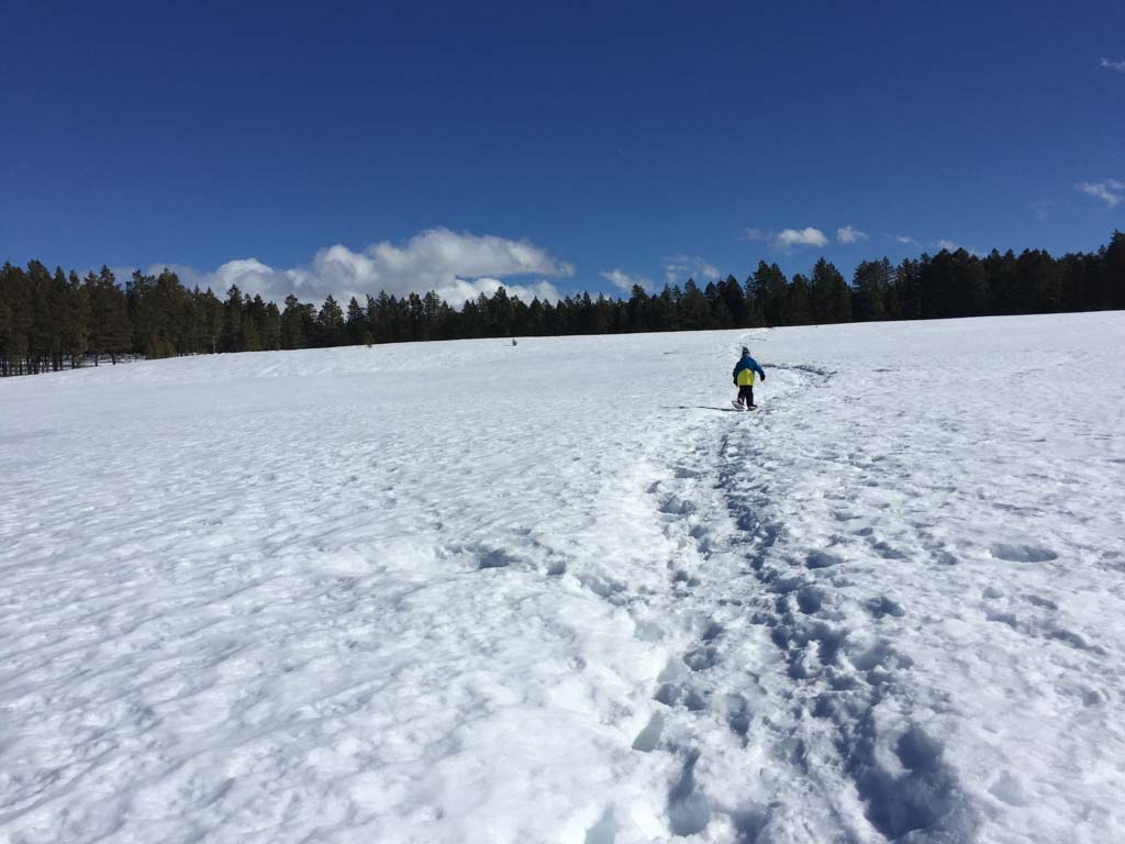 boy-snowshoeing-in-cranbrook