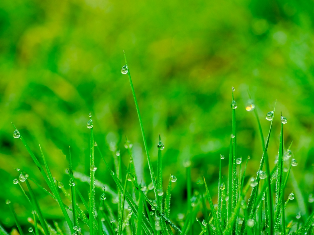 wet-grass-where-ticks-live