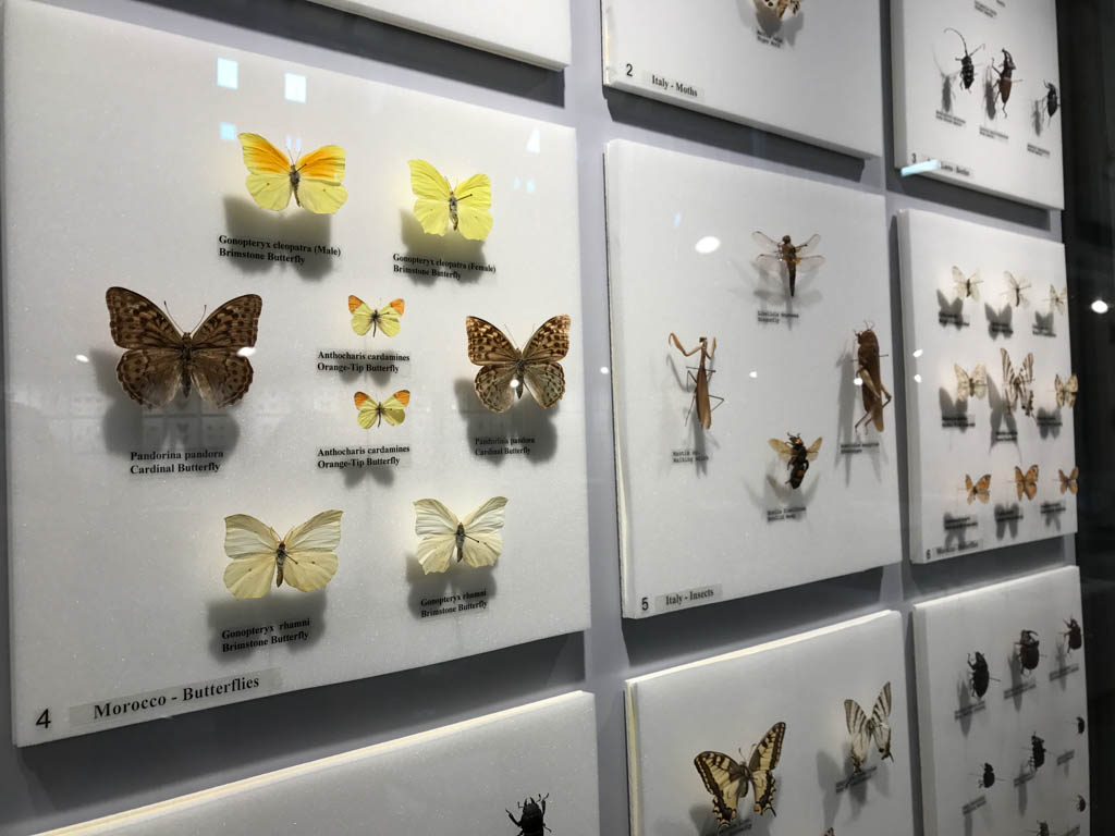 butterfly-display