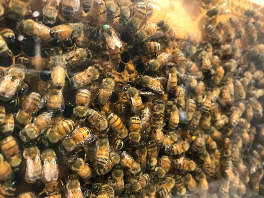 honeybee-display