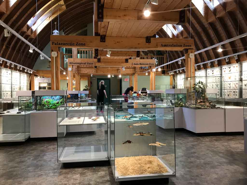 inside-newfoundland-insectarium