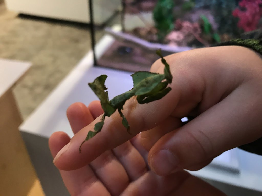 boy-holding-praying-mantis