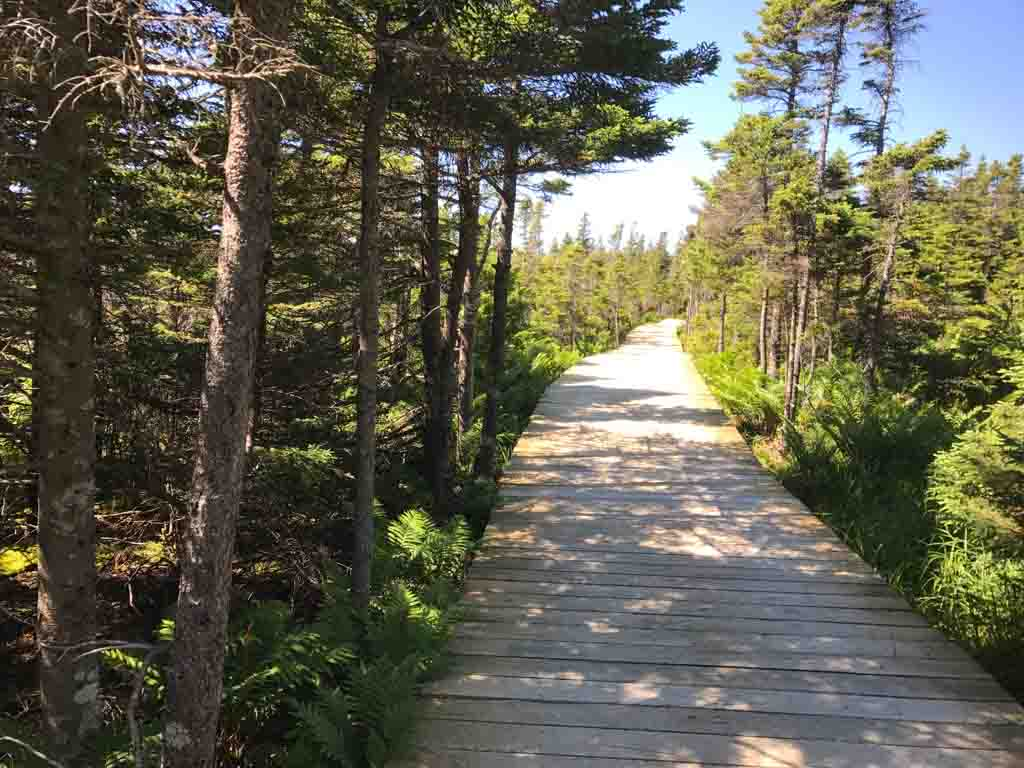 hiking-trail-in-cape-breton-highlands-national-park
