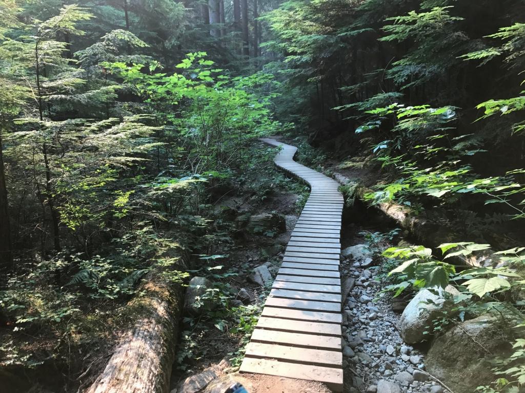 Pedalheads bike camp mountain bike trail