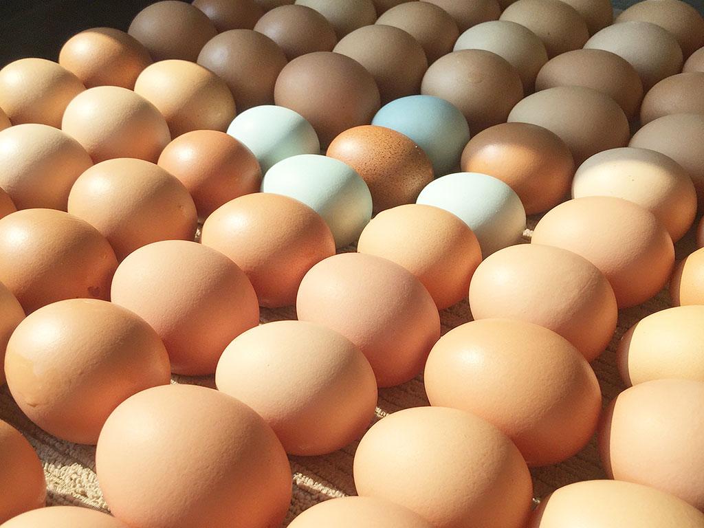 Keenan Family Farm Eggs