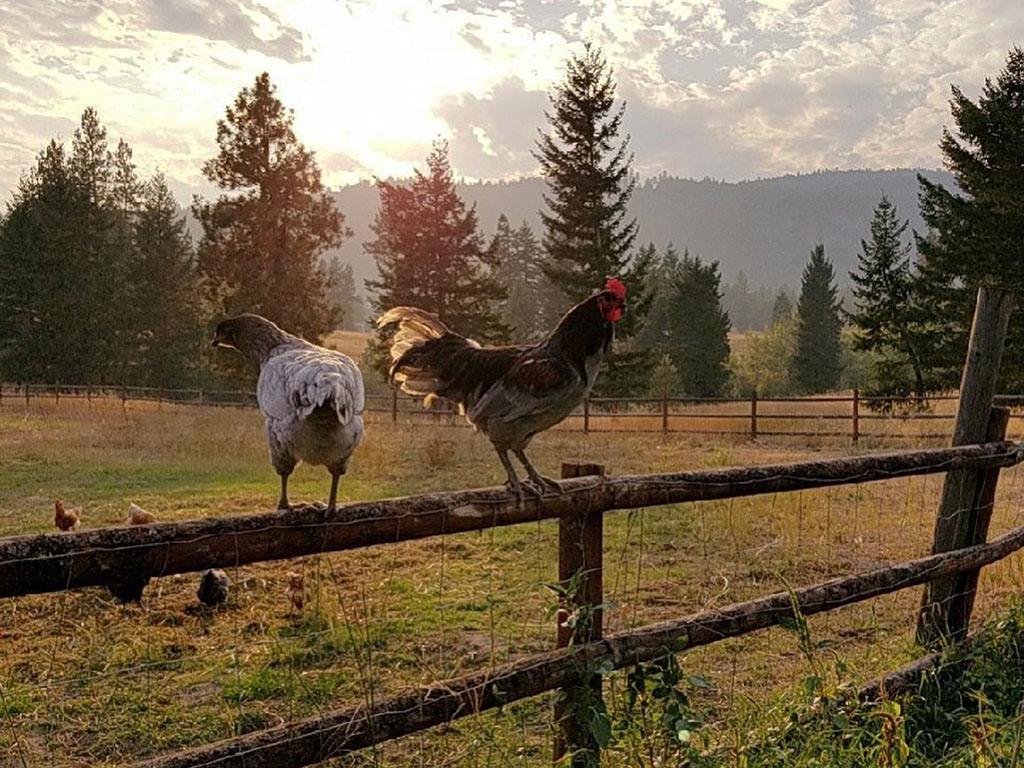 Keenan Family Farms Chicken