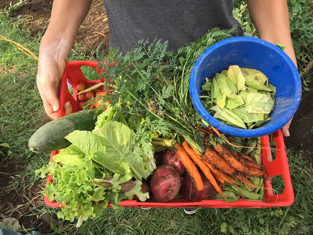 Basket of Vegetables from Keenan Family Farms