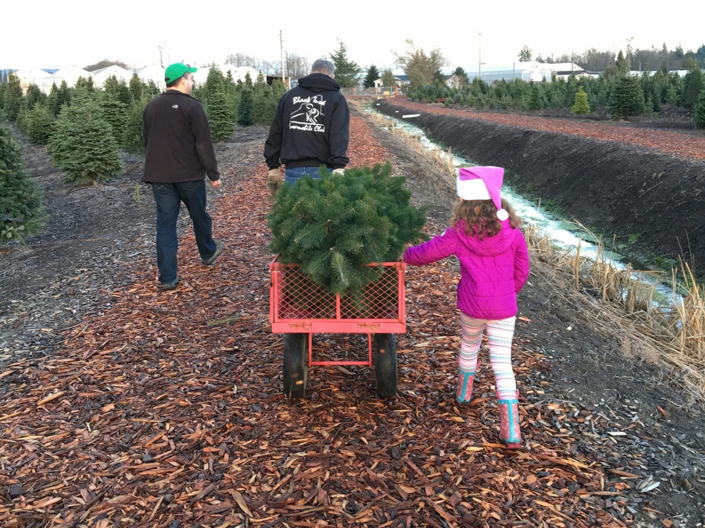 family-getting-tree-at-christmas-tree-farm