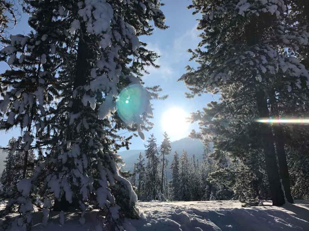 sun-shining-through-snow-covered-trees