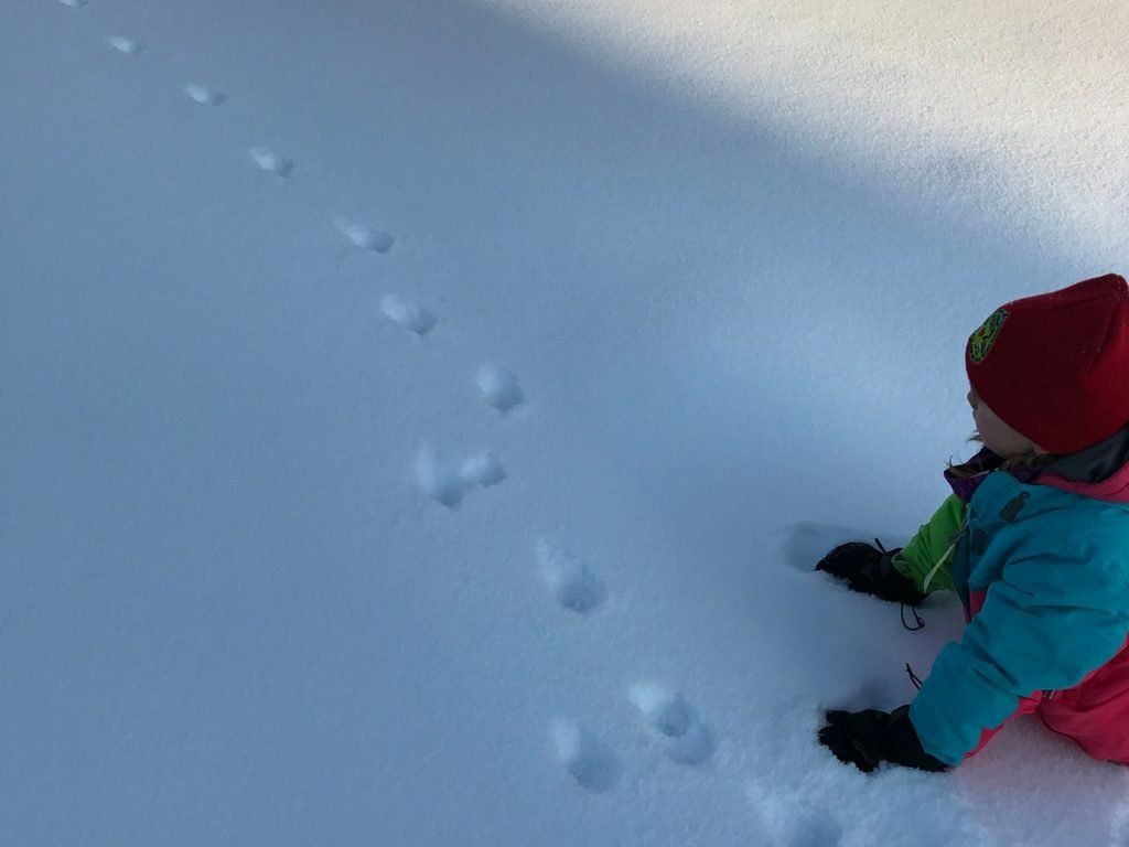 child-looking-at-animal-tracks-in-snow