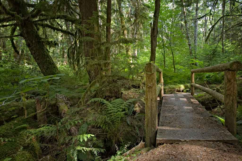 bridge-on-alice-lake-trail