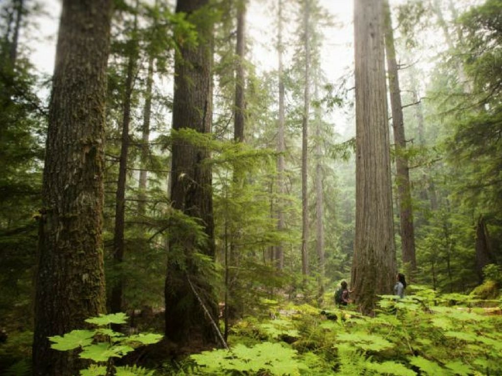 couple-in-old-growth-forest