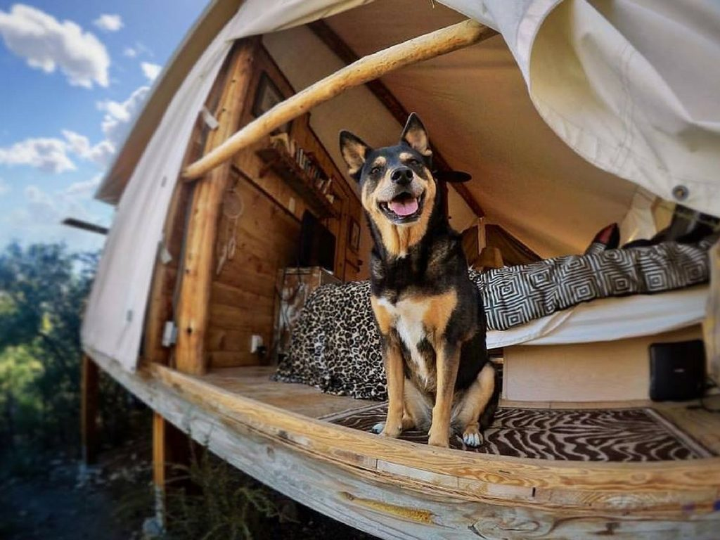dog-in-safari-tent