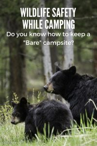 wildlife-safety-while-camping