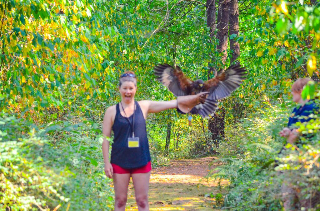 Jami Savage holding a hawk at the Pacific Northwest Raptor Sanctuary
