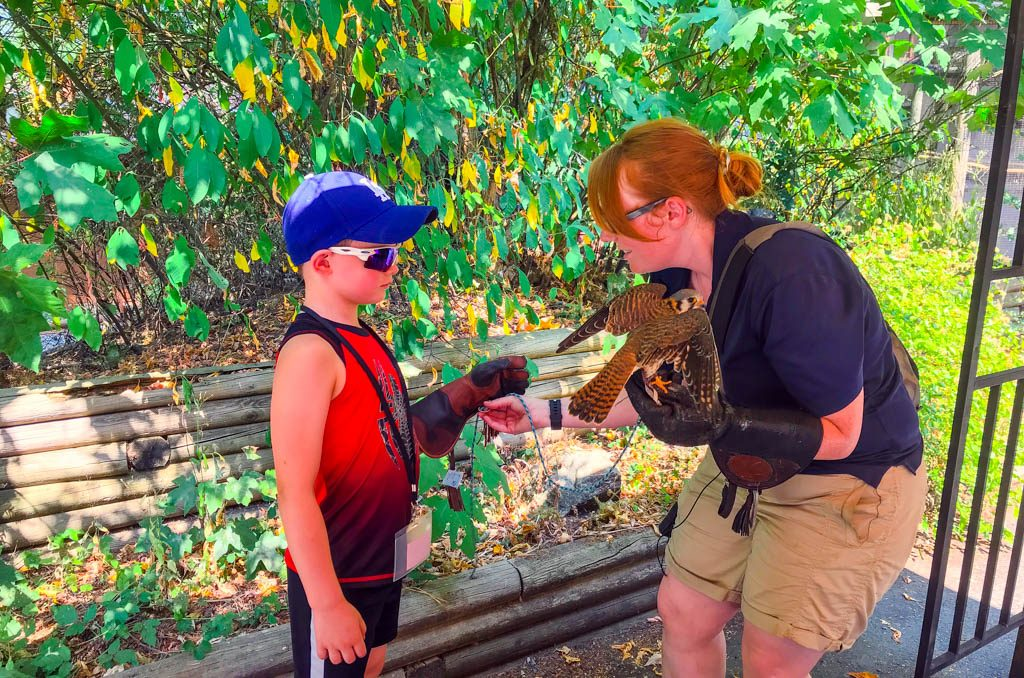 Boy with staff member at the Pacific Northwest Raptors