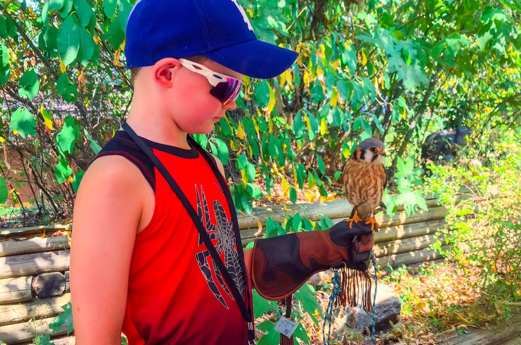 boy-holding-bird-of-prey