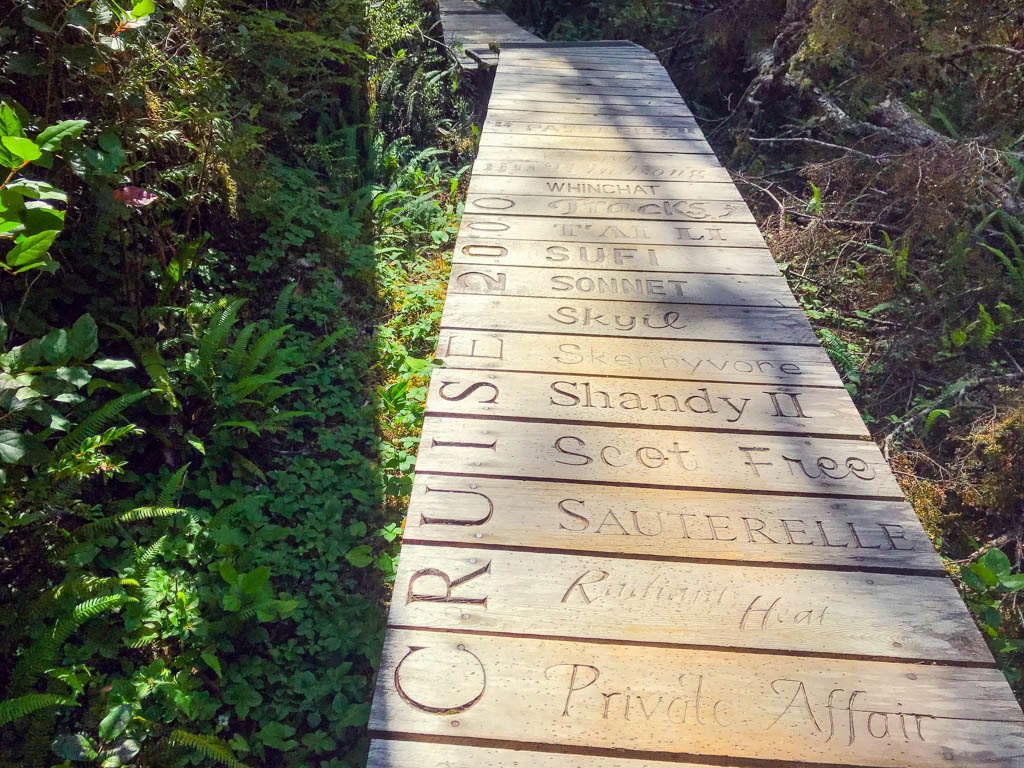 Boardwalk hiking trail in Tofino