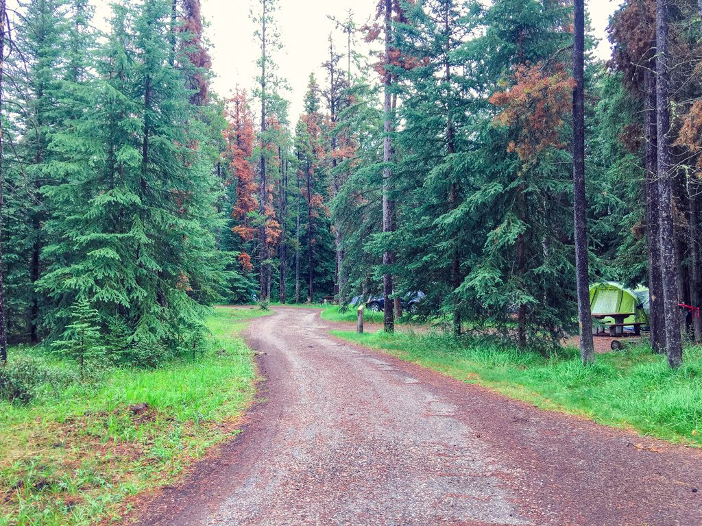 road-in-whistlers-campground