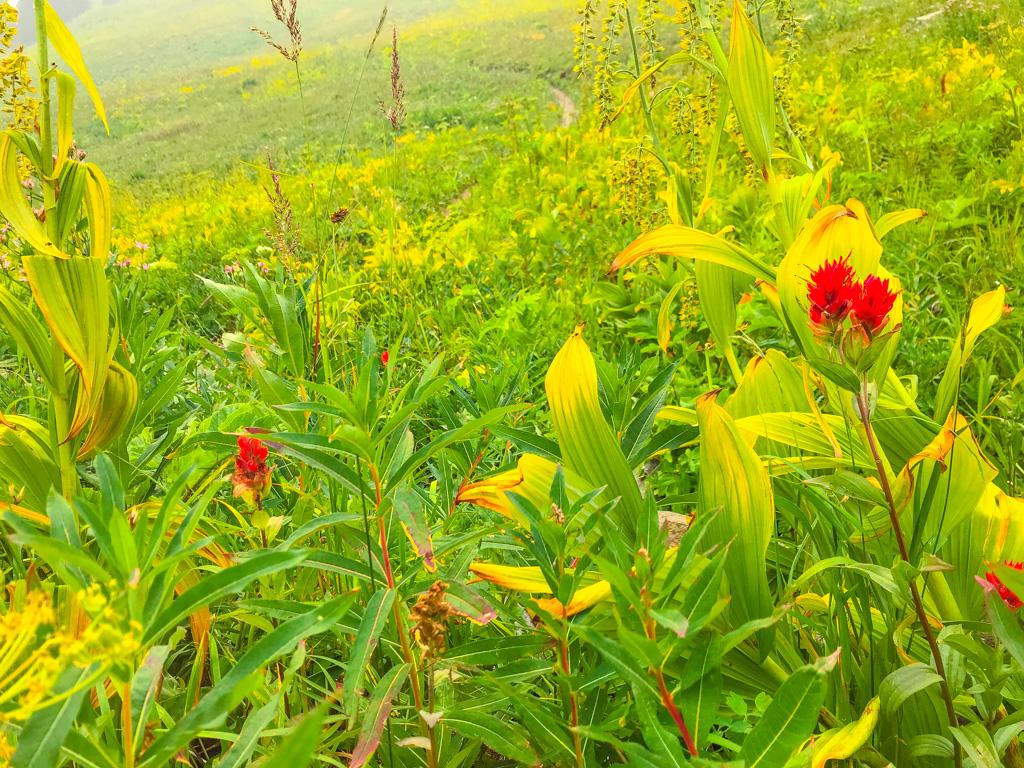 Sun-Peaks-flowers-on-side-of-mountain