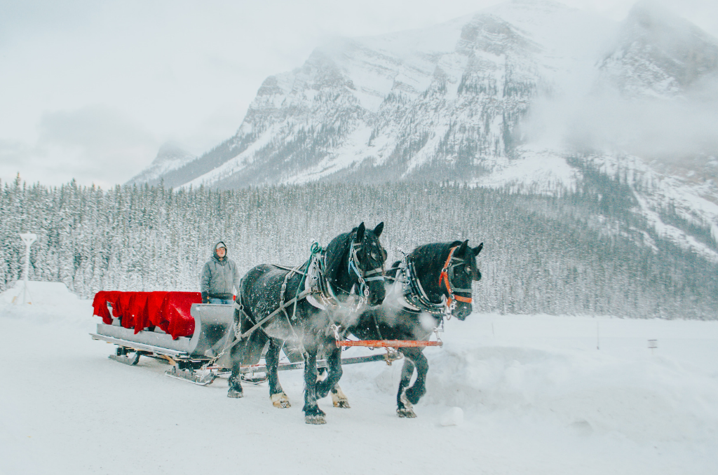 horse-drawn-sleigh-on-lake-louise