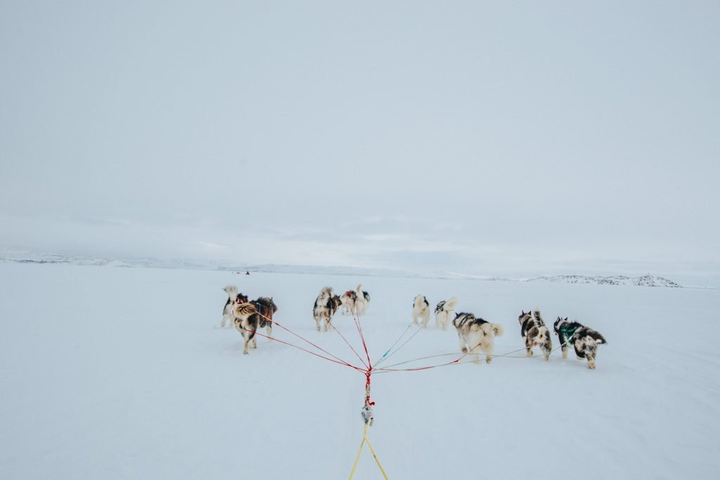 view-of-dogs-from-the-dog-sled