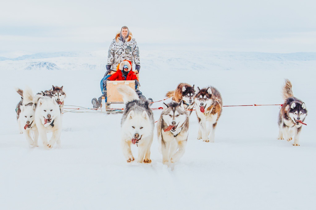 Jami Savage dogsledding across the arctic