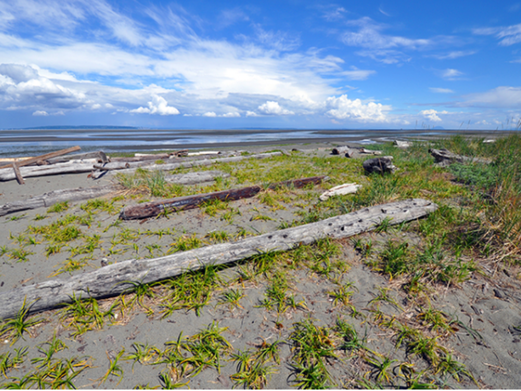 sunny beach at boundary bay regional park Where to have a campfire in Vancouver