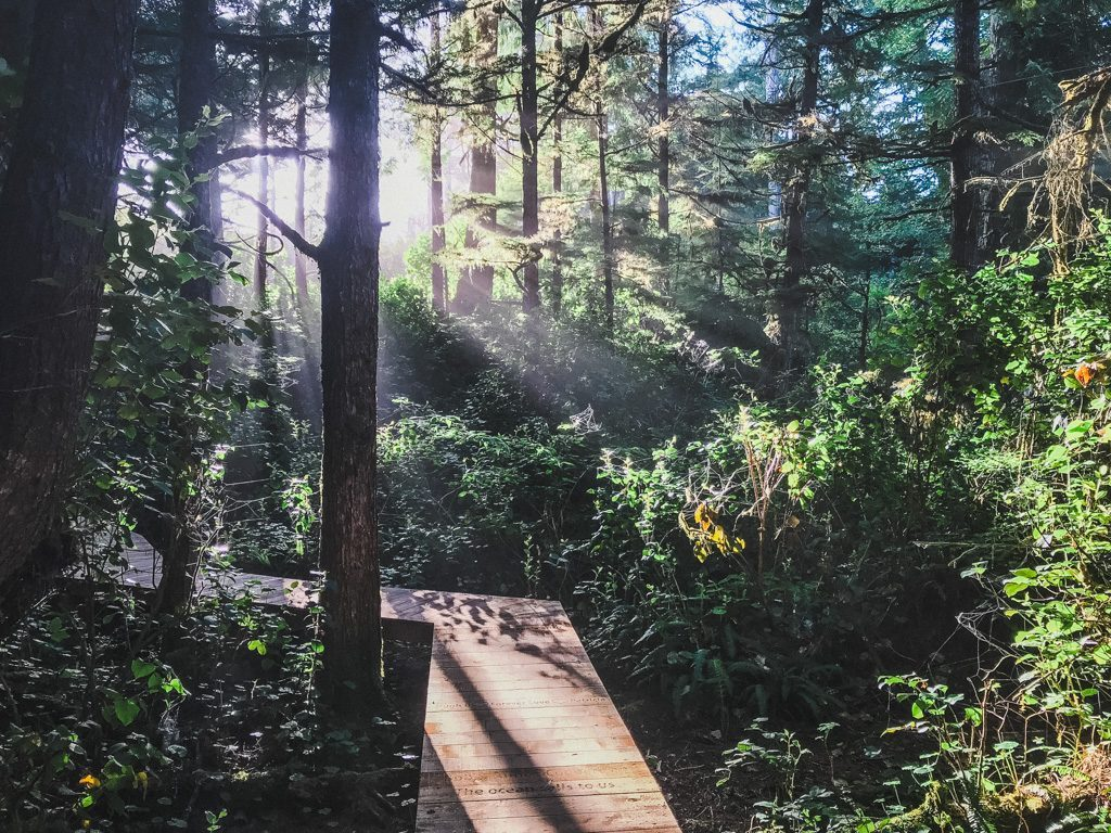 boardwalk-trail-in-tofino