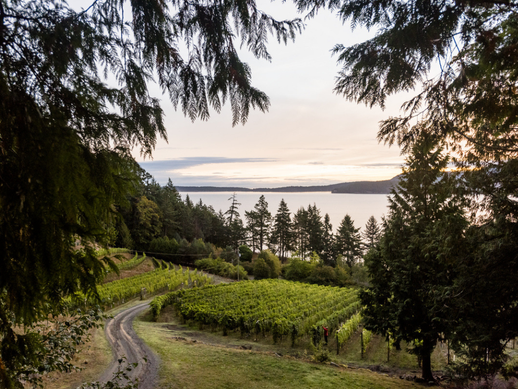 vineyard-on-pender-island