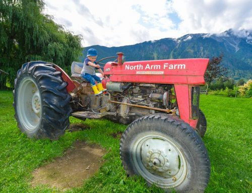 10 Photos To Inspire You To Visit North Arm Farms