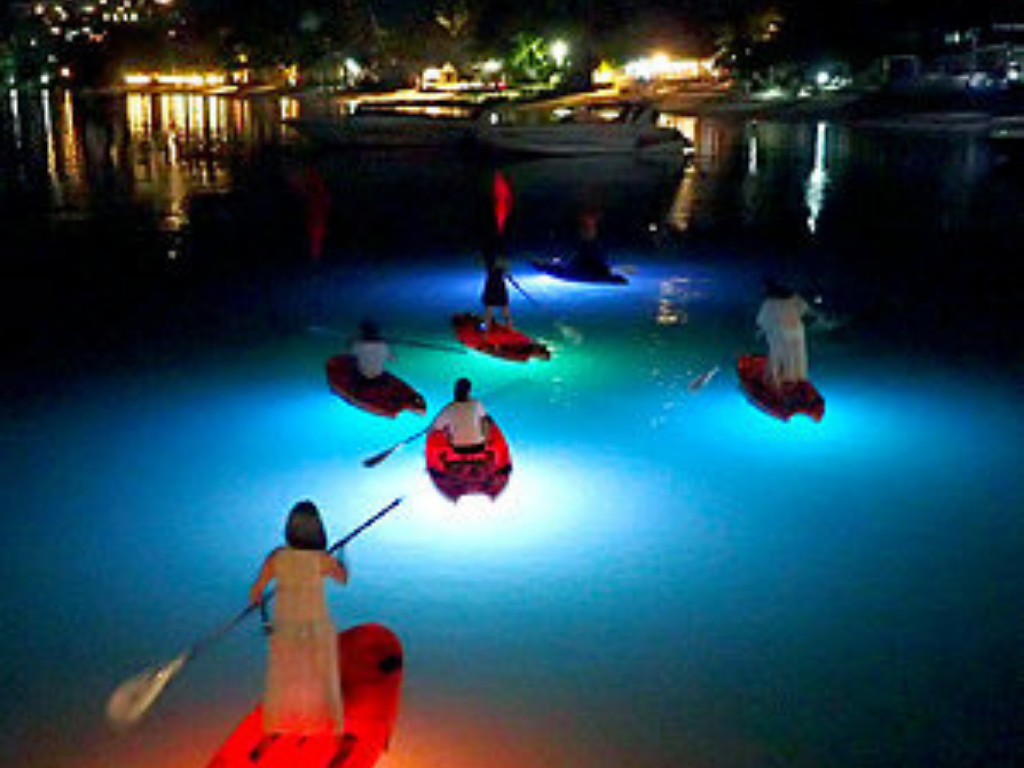 people on paddleboards and kayaks while on a Night Paddleboarding Vancouver tour